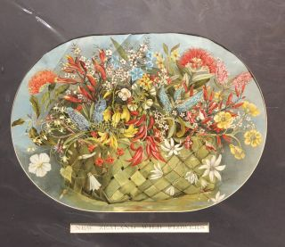 New Zealand Wildflowers Chromolithograph. Jessie BROWN