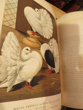 The Illustrated Book of Pigeons With Standards for Judging. Robert FULTON.