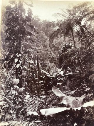 Fiji. Tropical Jungle - photograph